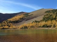 The peaceful gold of the larches