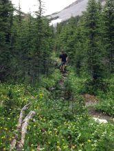 Trail to Harvey Pass after Borgeau Lake