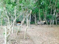 Kalalau Beach Campground, the best spots are taken by squatters