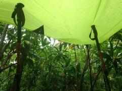 Under tarp in the sorm