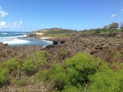 Coastal scrublad