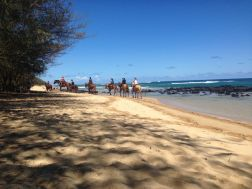 A pack of horses pass by along the beach carrying visitors