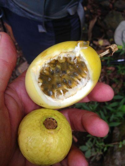 Wild Passionfruit