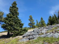 Outcropping and trees