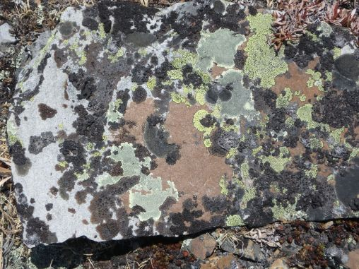 Lichen crust on rocks