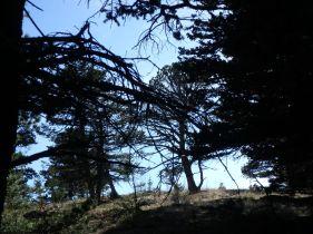 Marston Col Trees