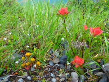 Sedum and Paintbrush