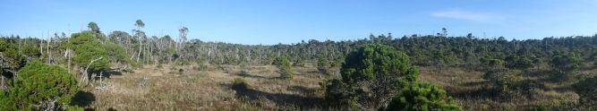Panorama of Shore Pine Bog Trail