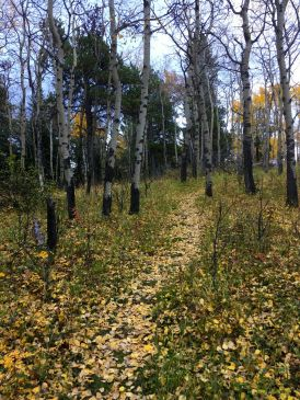 Aspen leaves cover the path