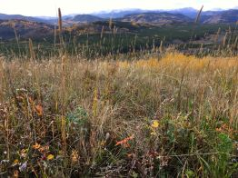 Meadow grass, timothy, wild rose and sage cover the hilltops