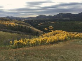 Approaching the aspens