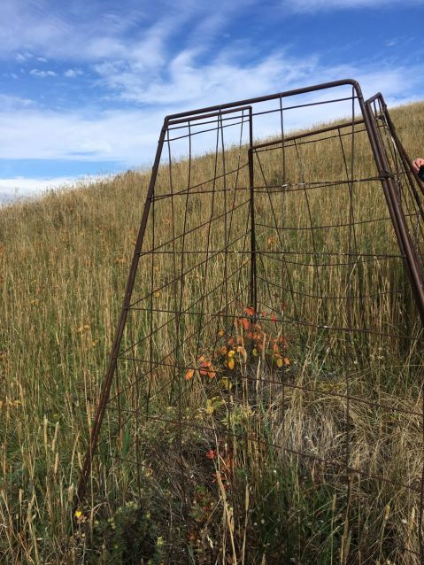 A grazing impact study cage