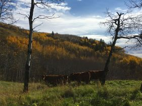 Cattle wander the hills , at this pony we continued following the trail before oftrailing it up to the third hill
