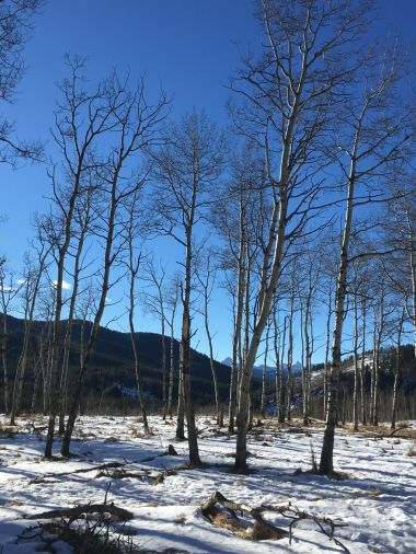 Mountains behind the aspens