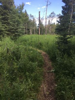 The trail on the ridge crest close to the lookout at Eagle View