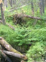 Stream foliage