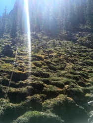 Ancient moss covered talus